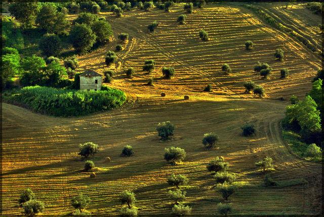 Banca dati delle terre agricole: primi 8 mila ettari con agevolazioni per i giovani